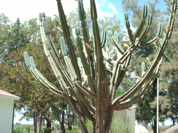 Cactus in Daylight Hours