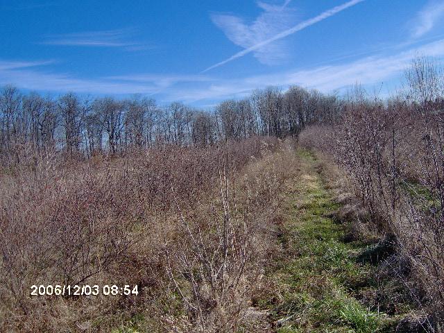 Our Gorden Road Nursery in Bucks County Pa has great habitats