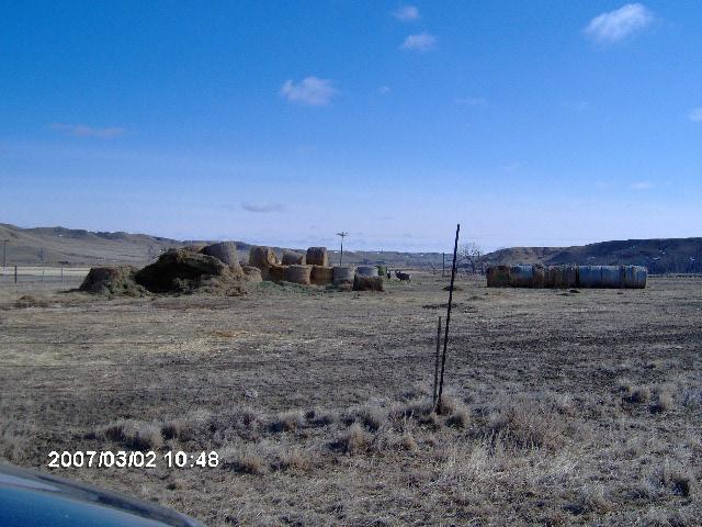 View of Mule Deer feeding on Wilson Ranch