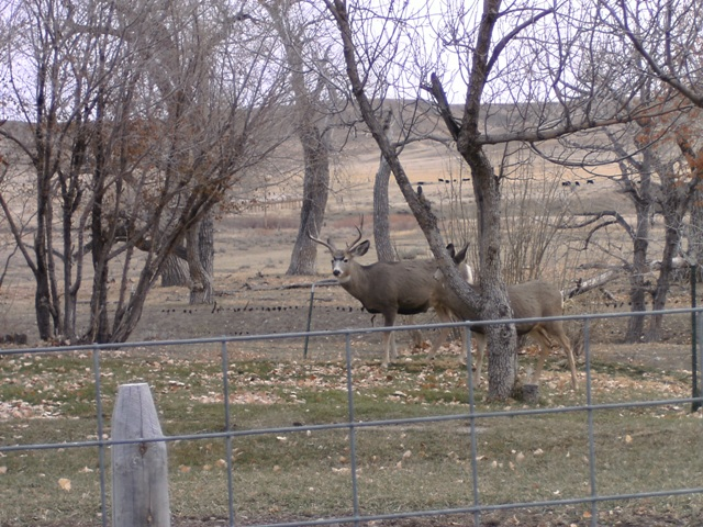 Deer at the Camp Site